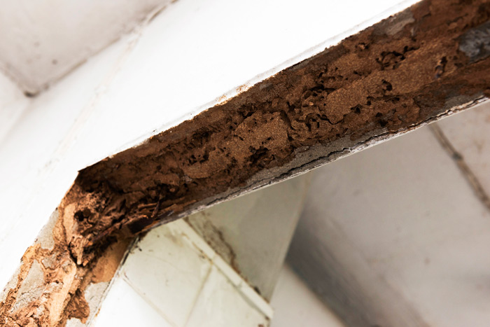 Wood Repair Fungus Repair San Diego Ca